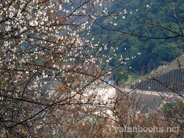 Taipei Life  Shimen Reservoir Photography Romanticism 台北生活 梅花 石门水库 风光摄影 浪漫主义 Yalan雅岚 黑摄会