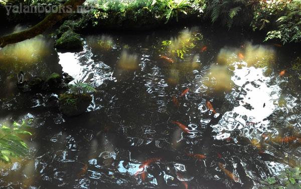 Tapei Life Spring Romanticism  Photography 台北生活 风光摄影  浪漫主义 Yalan雅岚 黑摄会